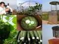 卫生部、农业部专家解读农药残留标准相关问题
