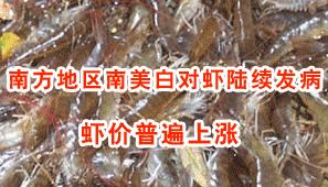 """染重病致产量大跌  虾价扶摇直上市民""""虾一跳"""""""